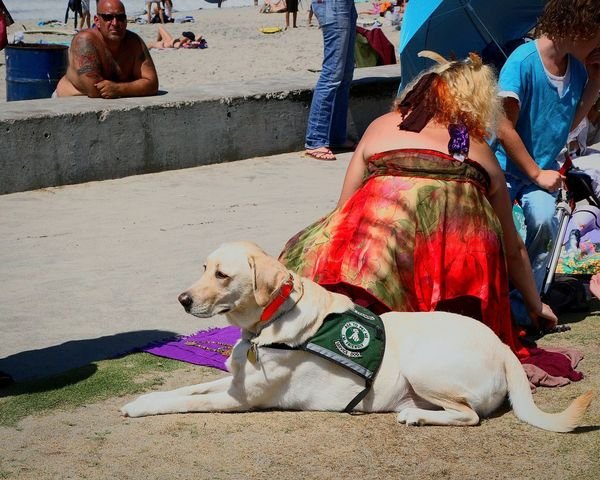 Service Animals on the beach because she can Enjoying The Sun Street Photography Enjoying Life Guide Dog Guidedog Wirking Dog companion dog Companion Dog