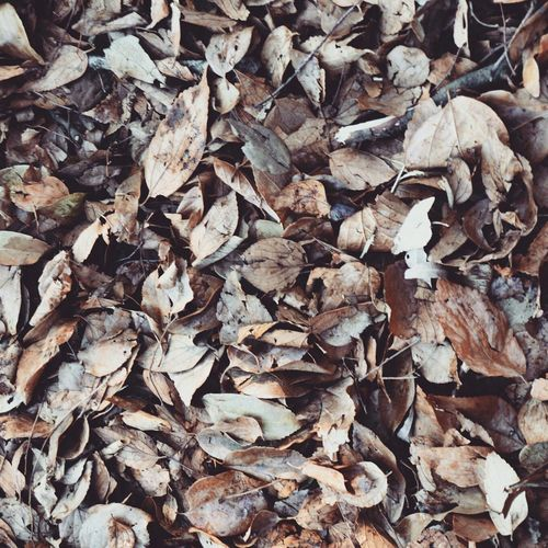 Autumn Leaves Leaves Nature Nature Photography Winter Leaves Winter Autumn Autumn Colors What I Value