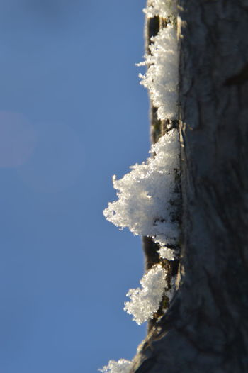 Close-up of snow covered tree against blue sky