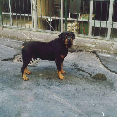 King Dog Aslan ???? Smile❤