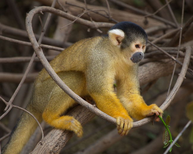 Close-up of monkey sitting on branch