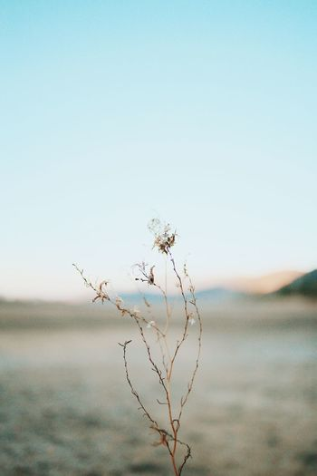Single Nature Tranquility Copy Space Beauty In Nature Outdoors Clear Sky Focus On Foreground Growth Day Tranquil Scene No People Plant Scenics Fragility Close-up Sky The Great Outdoors - 2017 EyeEm Awards