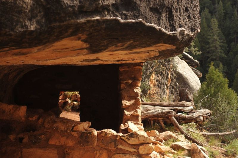 Native American dwelling in walnut canyon Mudstone Sandstone Dwelling Native American Sunlight Nature Solid Architecture Rock No People Rock - Object Day Built Structure Wood - Material Old Outdoors Abandoned Damaged History Weathered Tree Plant Cave
