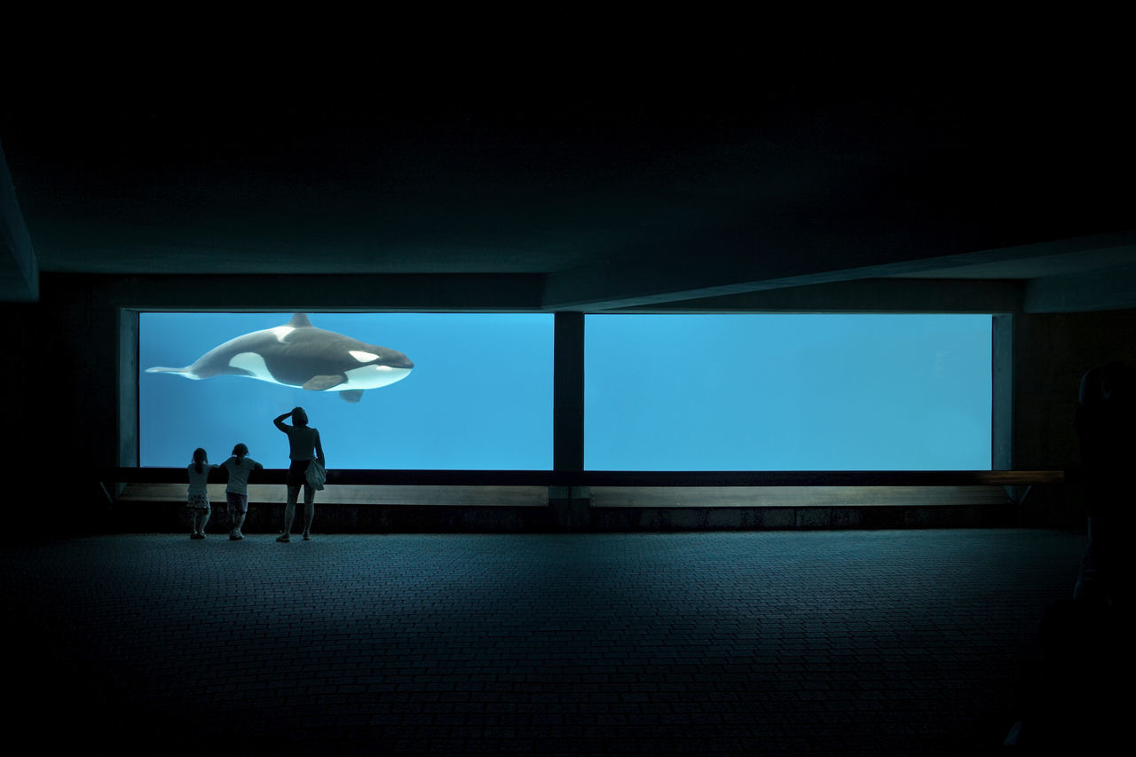 Mother with children watching killer whale swimming in fish tank at aquarium