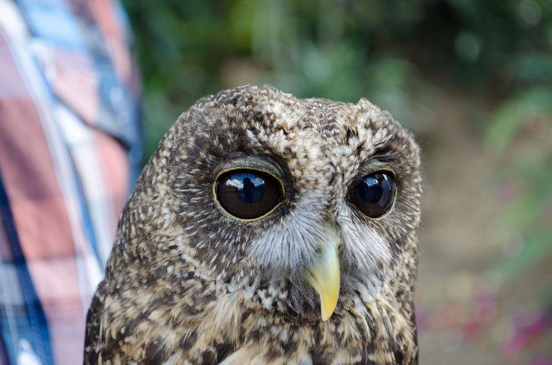 Close-up of owl at zoo
