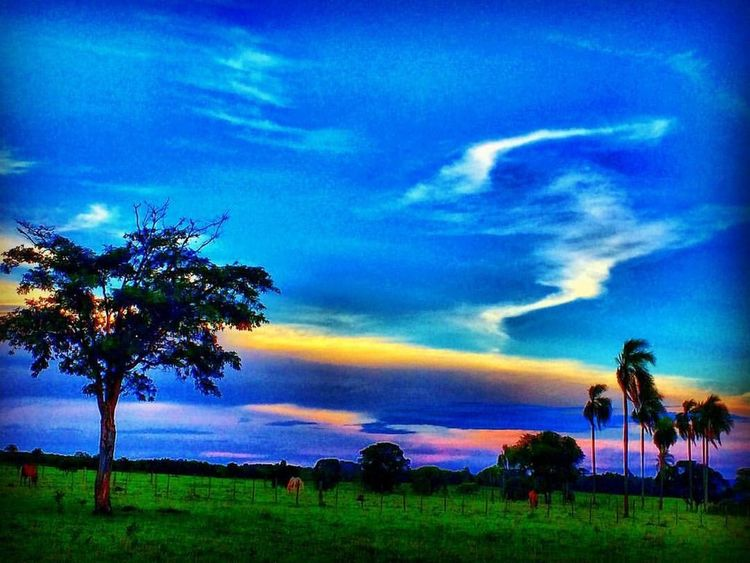 Farm Tree Cloud - Sky Beauty In Nature Sky Nature Sunset Scenics Dramatic Sky Tranquility Tranquil Scene Landscape Field Outdoors Grass No People Blue Day