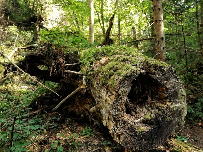 Forest Tree Trunk WoodLand Tree Tranquil Scene Tranquility Growth Nature Non-urban Scene Fallen Tree Moss Green Color Plant Branch Woods Solitude Landscape Scenics Log Beauty In Nature Slovakia Slovakparadise