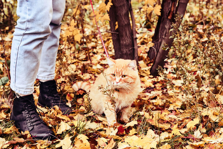Low section of person standing by cat with autumn leaves