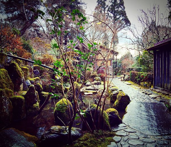 宝泉院 大原 京都 Kyoto 寺社仏閣 Relaxing