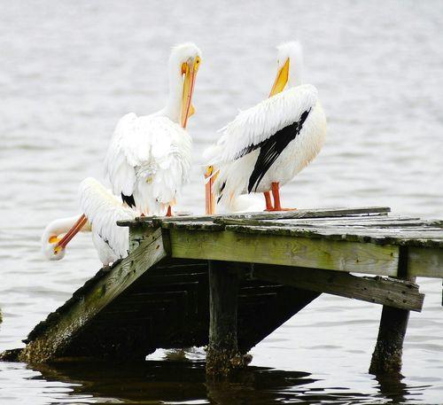NIKON D3 Port Aransas Texas Watching The Pelicans Pelicans The Great Outdoors - 2016 EyeEm Awards 2016 EyeEm Awards
