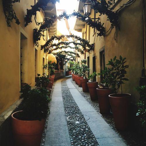 Narrow alley amidst plants in garden
