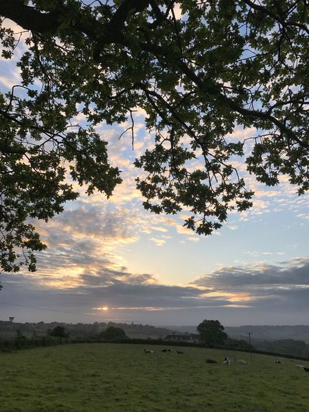 Landscape_Collection Nature On Your Doorstep Cows Farm Animals Cows In A Field Sunrise Tree Nature Beauty In Nature Scenics Tranquil Scene Sky EyeEm Ready   Animal Themes Day Sunset Growth No People Outdoors Cloud - Sky Tranquility Grass Landscape Field