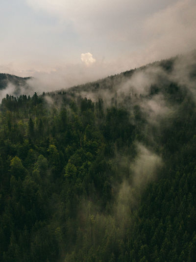 Dark view of mountain forest scenery with dramatic heavy clouds. forest landscape.