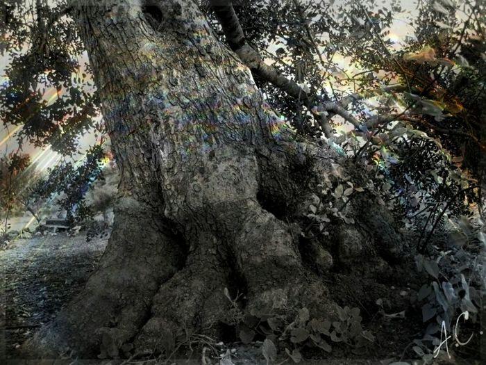 Tree_collection  Hugging A Tree EyeEm Best Shots - Trees Monochromeart Nature_monocrome Old Tree EyeEm Nature Lover Shining Tree Blackandwhite Photography Treeworld
