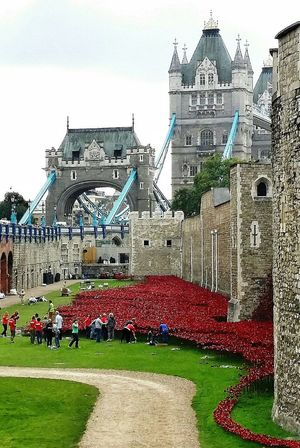 Blood Swept Lands And Seas Of Red September 2014 Wwi 100 Years Remembranceday Ceramic Poppies Tower Of London Tower Bridge  London England