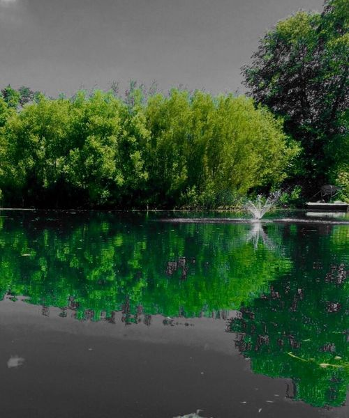 Nature Water Pond Reflection Color Filter Green