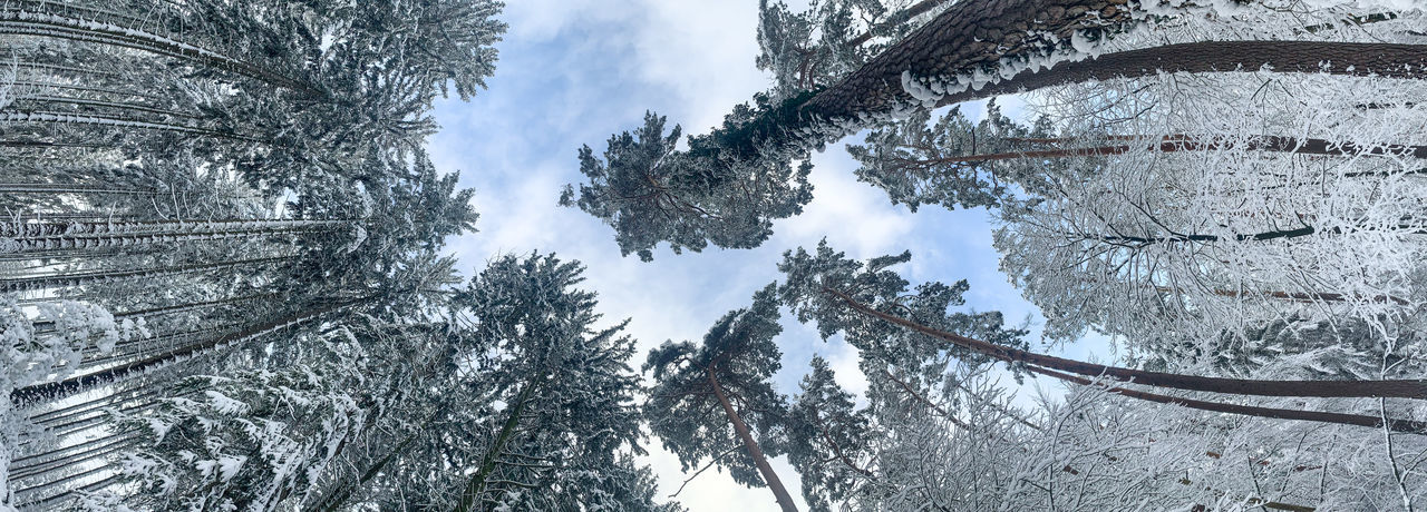 Low angle view of frozen trees against sky