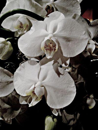 Magnifique bouquet de fleur