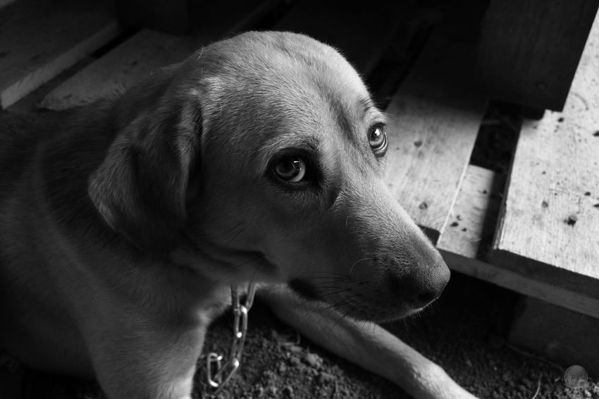 Portrait d'un air d'innocence Taking Photos Check This Out Hello World Dog Dogslife