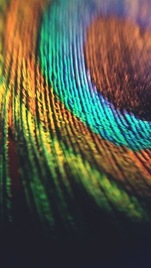 Urban Nature Peacock Feathers Unusual Beauty Colorsplash Pattern, Texture, Shape And Form Pattern Pieces Taking Photos Macro_collection Macro Beauty Macro Photography Macro Nature EyeEm Nature Lover EyeEm Gallery EyeEm Team EyeEm Macro Blurred Visions Light And Shadow Coloursplash Eyeemphotography Showcase: January Samsung Galaxy S5 Macrophotography Colours Of Carnival