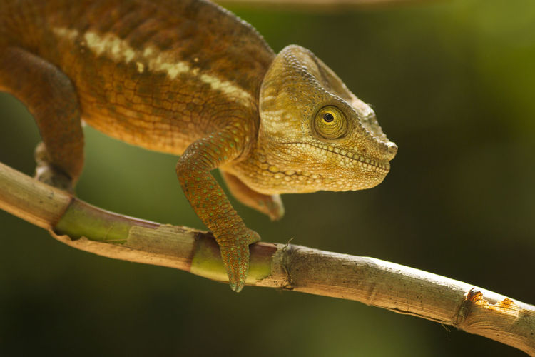 Close-up of a lizard on a tree