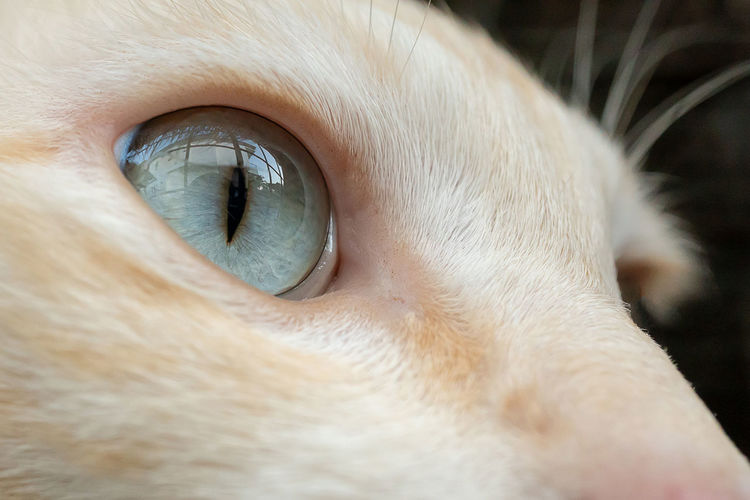 Close-up of dog eye