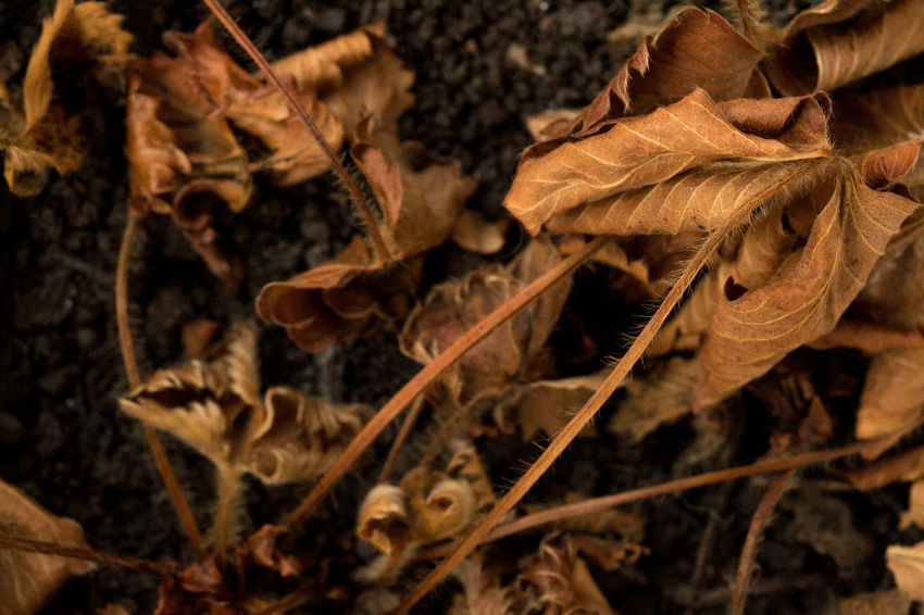 Autunno Autumn Beauty In Nature Close-up Flower Head Freshness Leaf Nature No People Outdoors Plant