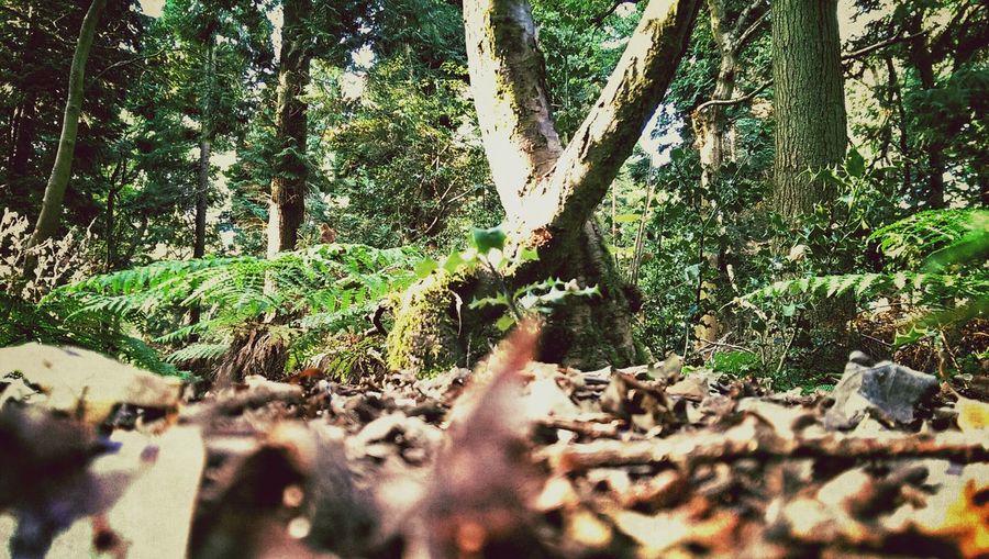 Woods Light And Shadow TreePorn Trees