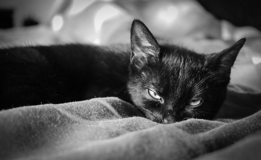 Black kitten's
