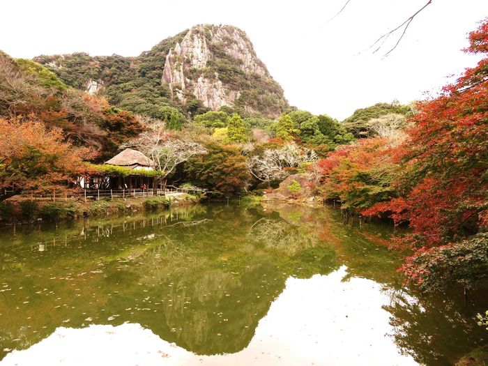 Water Tree Nature Outdoors Day Beauty In Nature Saga 佐賀 Japan Harbor 銀杏 武雄 御船山 Green