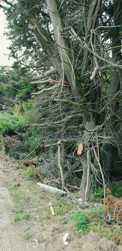 Cutting trees and shrubbery the wrong way Nature Destroyed Tree Full Frame Close-up Green Color Plant Life Botany