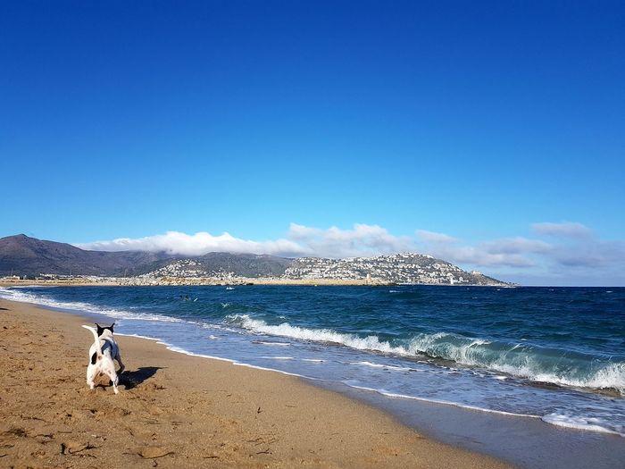 Caminando entre aguas. Dogs Dogs Of EyeEm Dog Lover Dogmodel Dogslife Dog Portrait