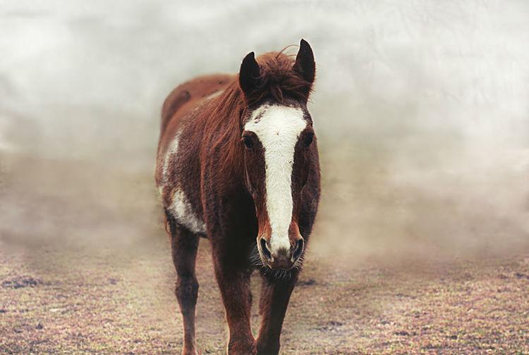 Stacy Blaze Chesat Dark Fog Horse Misty Out Sad Soft Stare Walker
