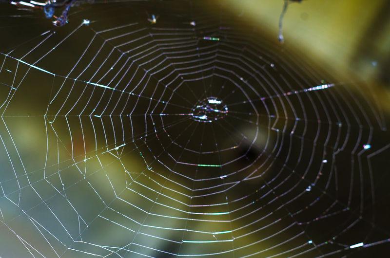 那天去gai拍,看到蜘蛛网网