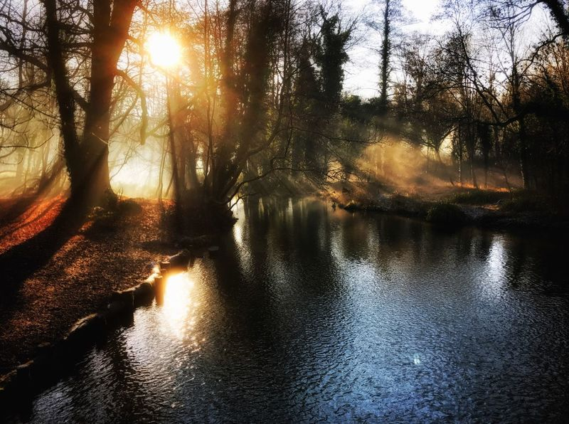 Watford Tranquility Tranquil Scene Sunlight Tree Reflection Nature Water No People Light And Shadow Sunbeam Sun
