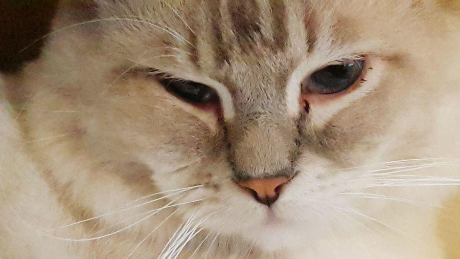 Cat Closeup Furrybabies