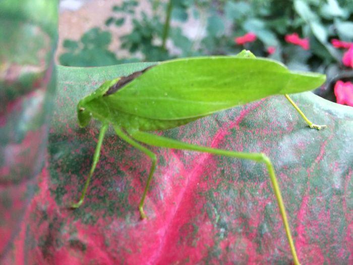 Stunning bug