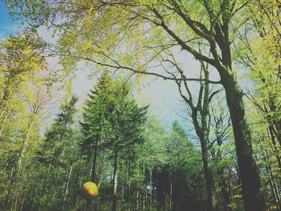 Spring forest Nature_collection Mexturesapp EyeEm Nature Lover EyeEmSwiss Trees Ilovetrees Tree Streamzoofamily