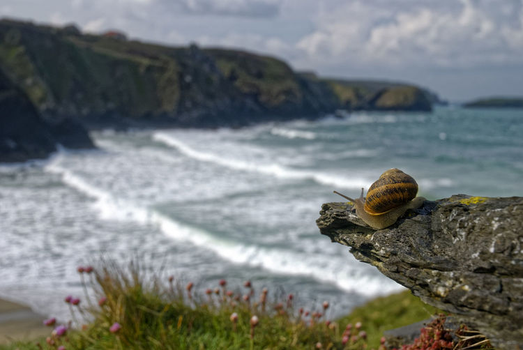 A Cliffs Coastline Surf Beauty In Nature Coast Cornwall Cove Day Fauna Focus On Foreground Fragility Gastropod Nature No People Outdoors Sea Sky Snail Water Waves