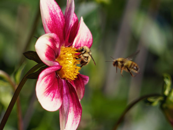 Bee Line Animal