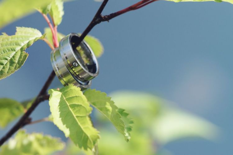 Wedding rings on branch with fresh green leaves Green Grey Blue Marriage  Rings Nobody Copy Space Wedding Background Rings Wedding Rings Wedding Leaf Plant Part Plant Close-up Focus On Foreground Nature Day Green Color Growth No People Selective Focus Outdoors