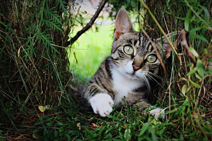 Taking Photos Czech Catoftheday Cute Pets Catlover Photoshoot ♡ Cutecat Cat♡ Hello World Catcollection