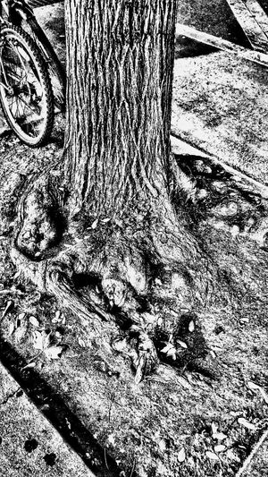 Tree Pit Blues East Village Nyc Survival Strategy
