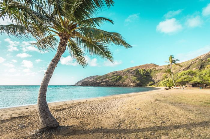 H A N A U M A B A Y Hawaii Landscape Beauty In Nature Beach Palm Tree Hanauma Bay Hanauma Bay State Park Hanauma Bay Beach 하나우마베이 야자수 하와이 야자나무