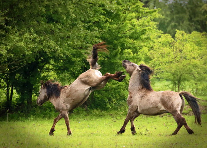 Horses standing on grass