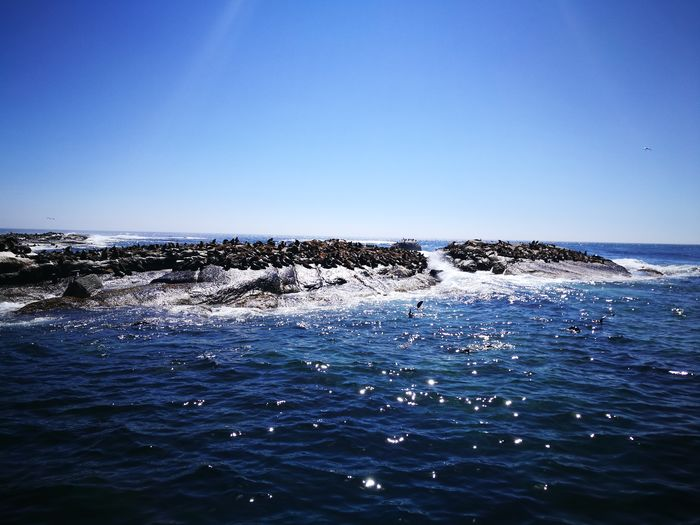Seals galore Sealwatching Seals Sea Blue Water Horizon Over Water Clear Sky No People Nature Wave Swimming Beach Day Sky Underwater UnderSea Beauty In Nature Outdoors Sea Life