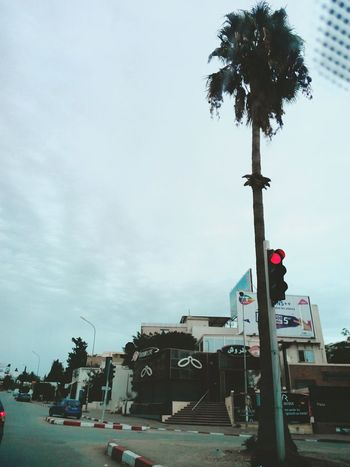 Palm Tree Tree Road Sky Cloud Day Vehicle Outdoors Car Street Tree Trunk No People