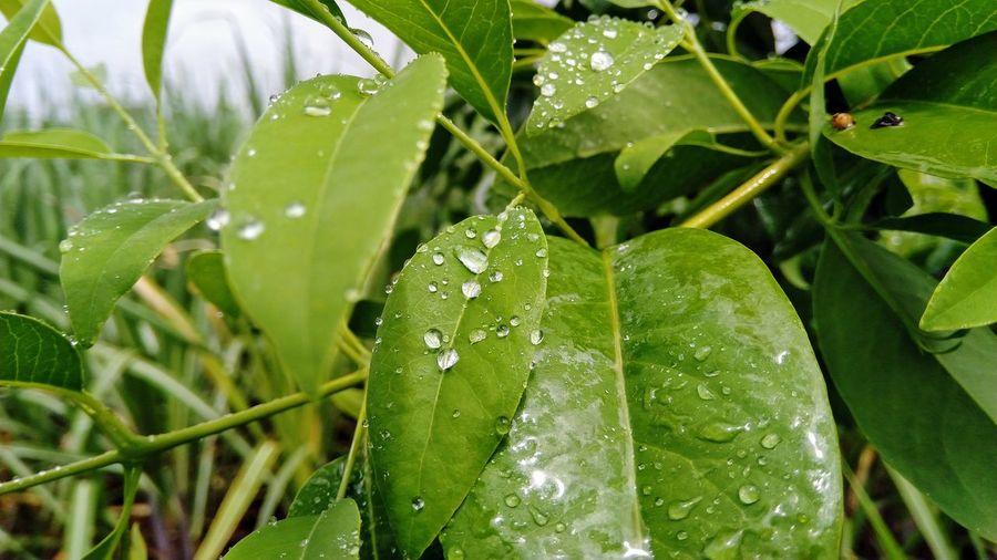 buety of leaf