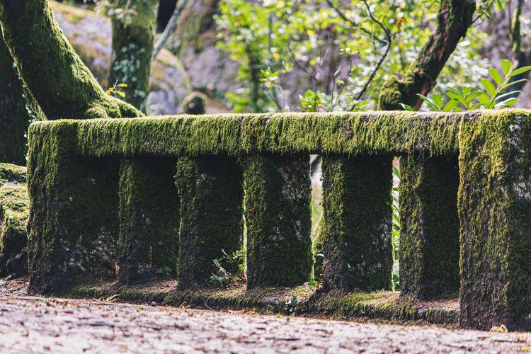 Trees growing in park