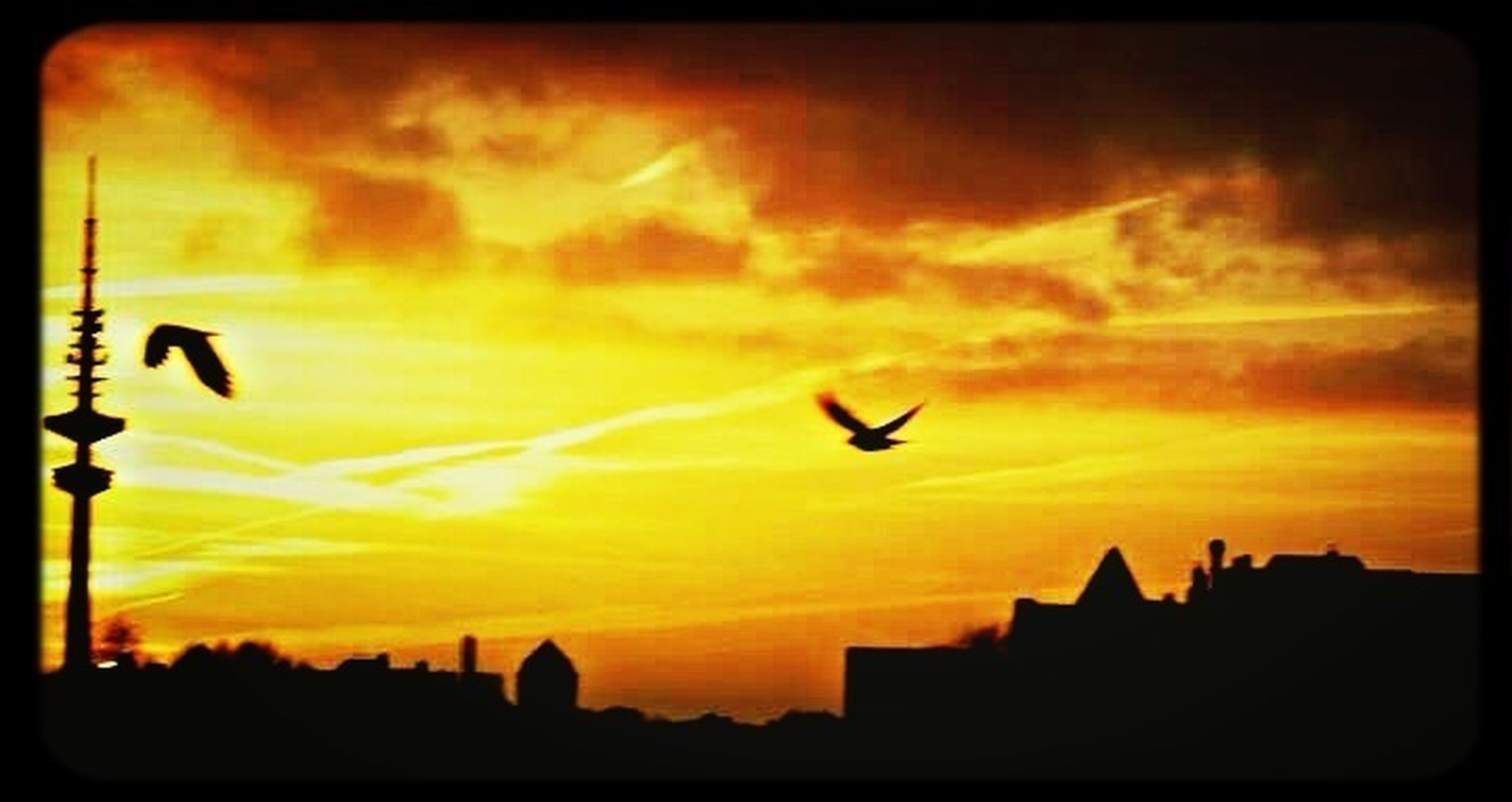 sunset, silhouette, flying, bird, animal themes, building exterior, animals in the wild, sky, wildlife, architecture, orange color, built structure, one animal, transfer print, cloud - sky, auto post production filter, low angle view, mid-air, beauty in nature, city
